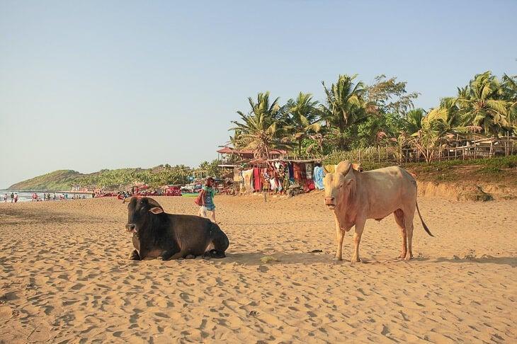 visit goa in india