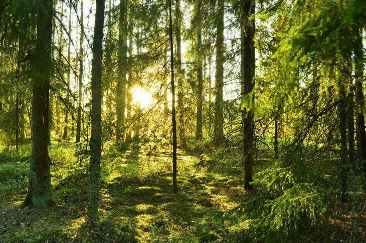fakta om sverige skog