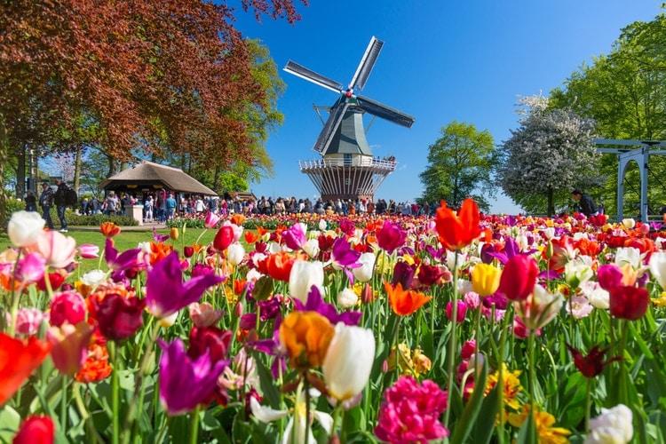 Dagsutflykt från Amsterdam