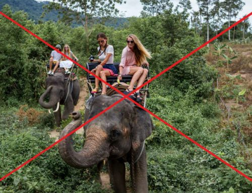 Why you should never ride on an elephant