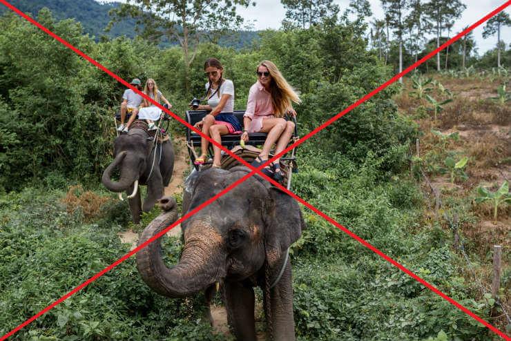 elefantridning nej