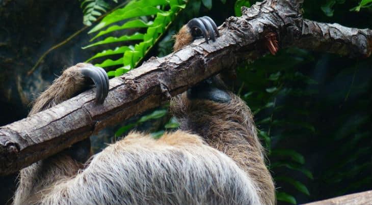 sengångare klor