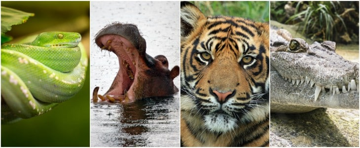 världens farligaste djur lista