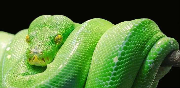 Un serpiente