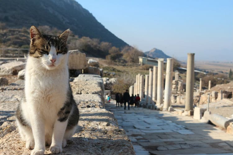 visit turkey cat