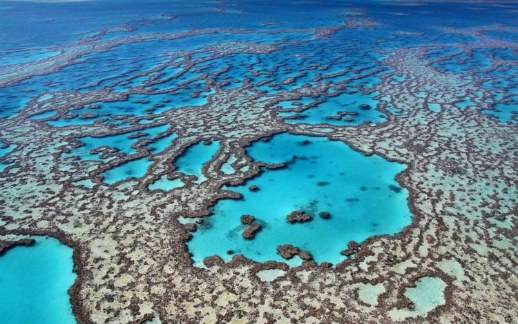 great barrier reef - australia facts