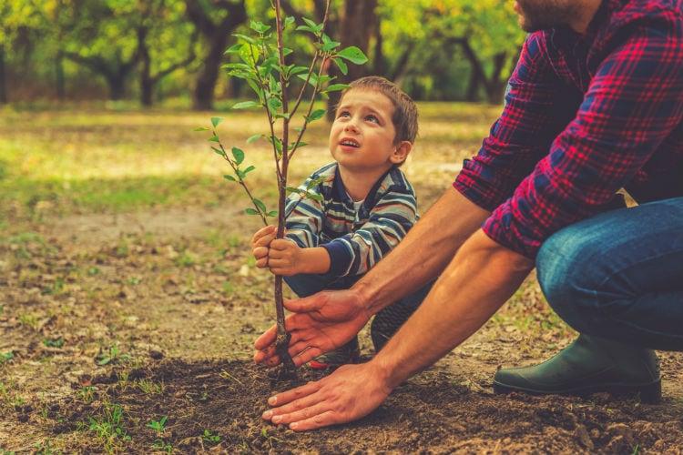 plantera träd - klimatkompensation