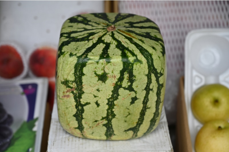 square watermelon in Japanese market