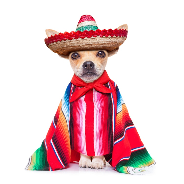chihuahua - facts about mexico