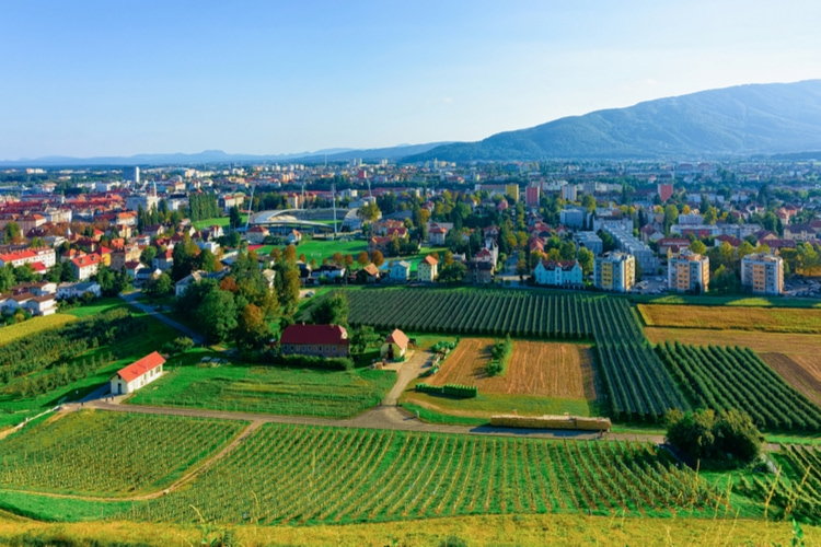 Vineyard in Slovenia