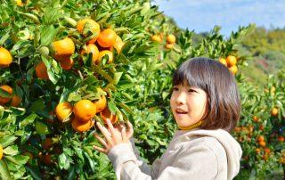 Japanska frukter