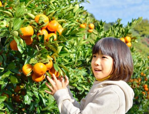 15 Japanese Fruits That you should Taste while visiting