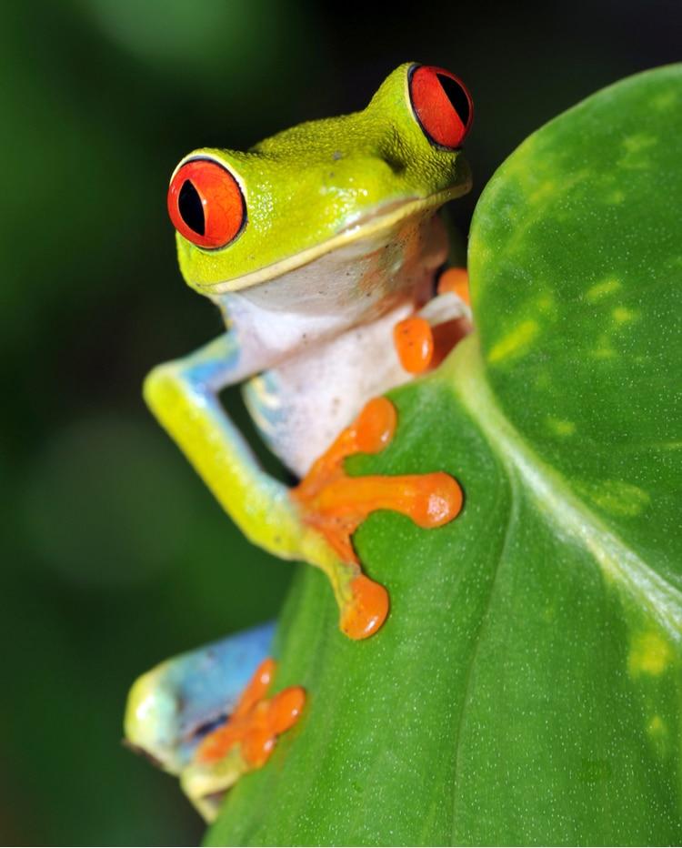 Costa Rican animal