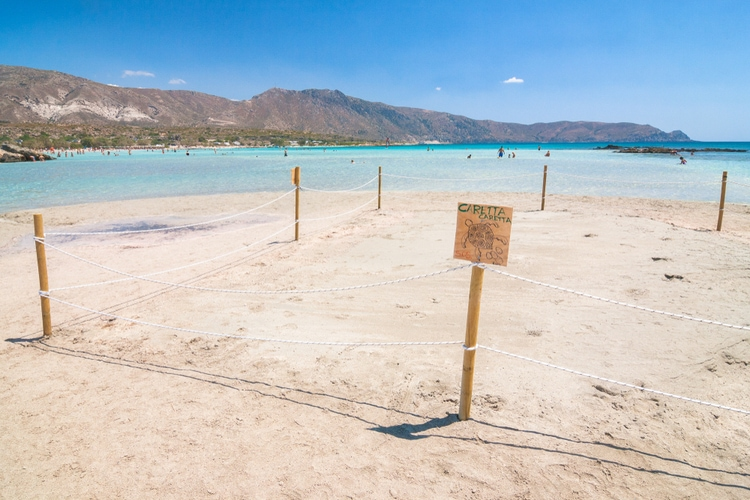 Protected turtle area