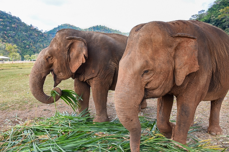 Elephant Nature Park in Chiang Mai - My Experience and Other
