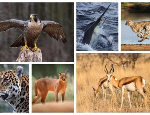 Fastest Animal in the world on land and water