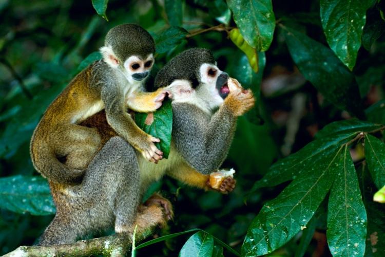 Amazon rainforest facts