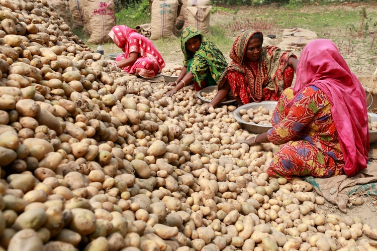 Bangladeshi agriculture