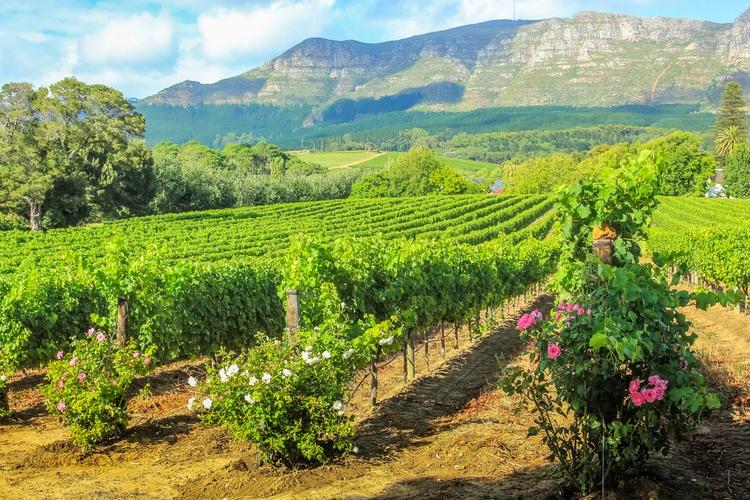Cape Wine route