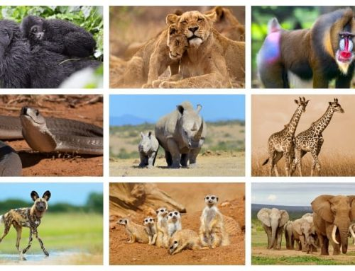 25 Animals in Africa that you should know about