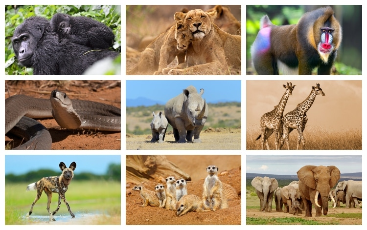 25 Animals in Africa that you should know about - Swedish Nomad