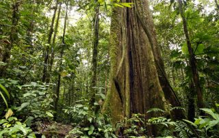 Facts about Rainforests