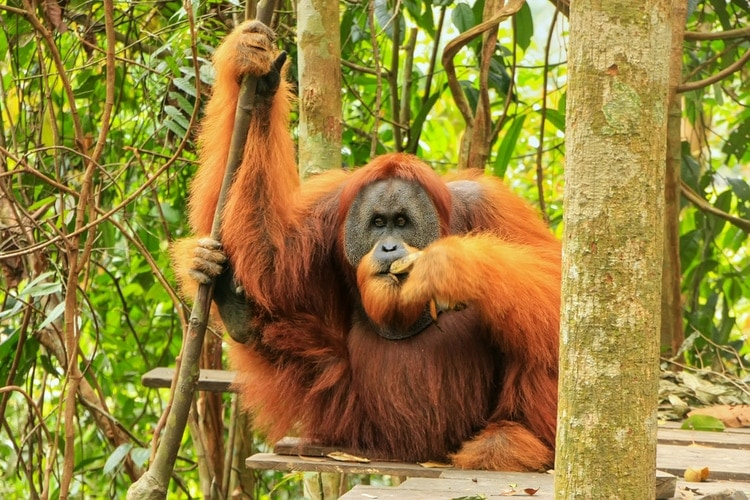 25 Rainforest Animals That You Should Know About Swedish
