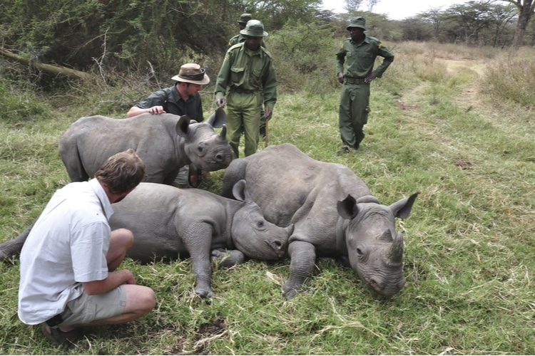 Poaching animals in Africa