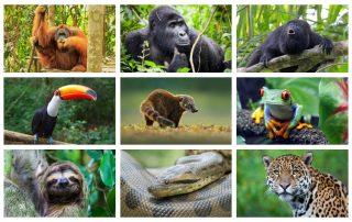 Djur i regnskogen