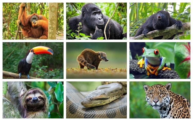 Animales de Selva