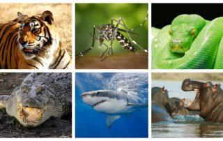 animales más peligrosos del mundo