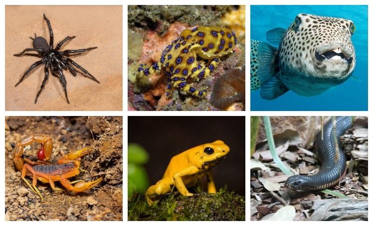 Animales Más Venenosos del mundo