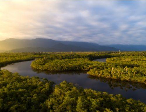 15 Intressanta Fakta om Amazonas Regnskog