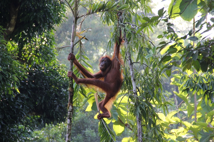 Borneo is one of the largest islands in the world