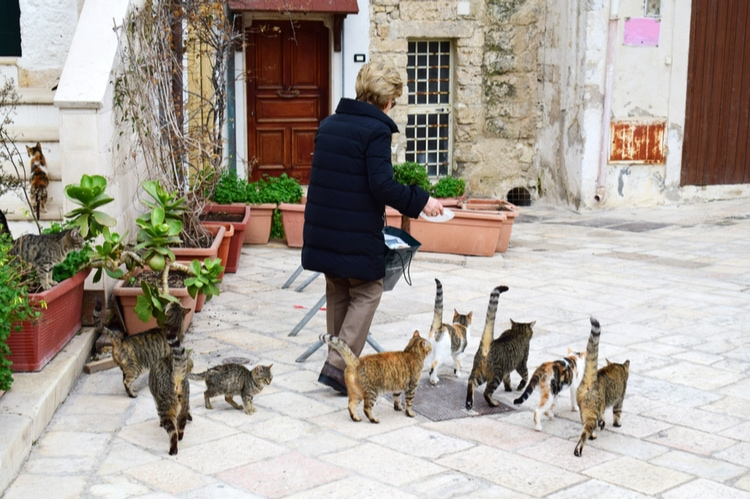Gattara is the italian word for old cat lady