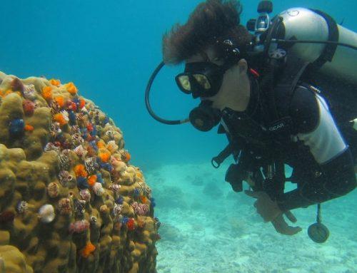 Hur det är att jobba som dykinstruktör utomlands