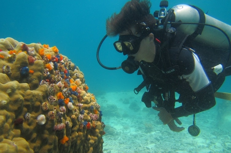 work as a diving instructor