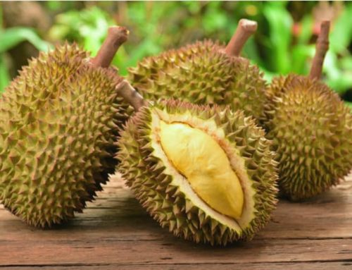Durian Fruit – Why it smells so bad and other interesting facts