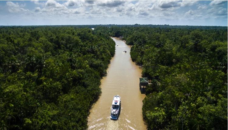 Amazonfloden från ovan
