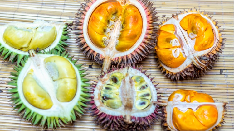 Varieties of Durian Fruit