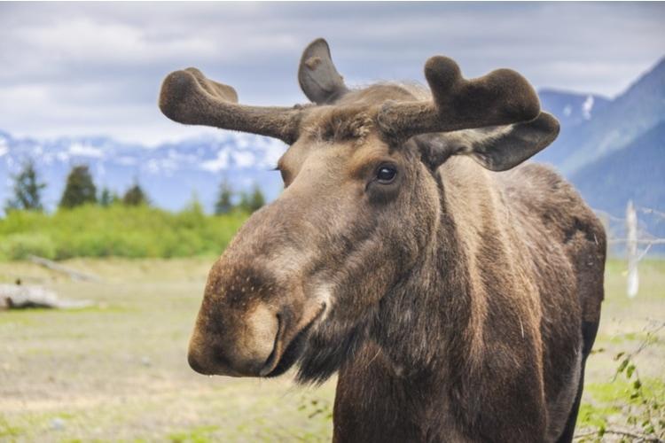 Rolig fakta om Alaska