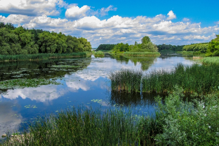 Flora and fauna Balaton