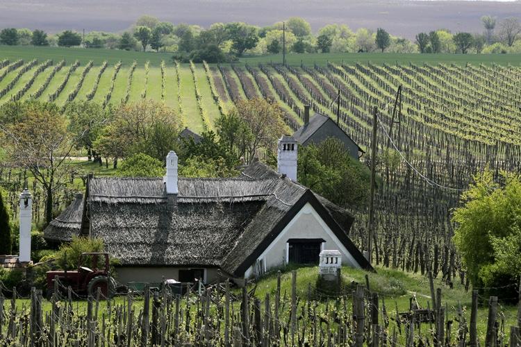 Vineyards Lake Balaton