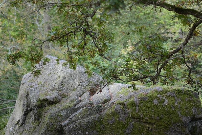 Kjugekull naturreservat