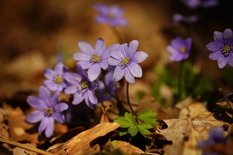 blommor i kjugekull