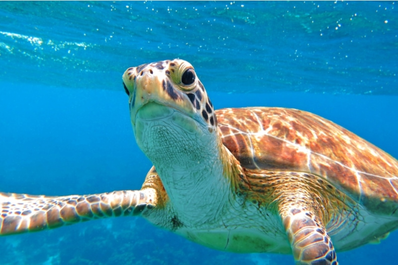 Snorkel with Turtles in Zakynthos