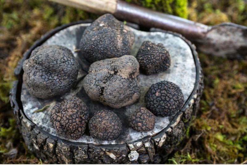 truffles in Pula
