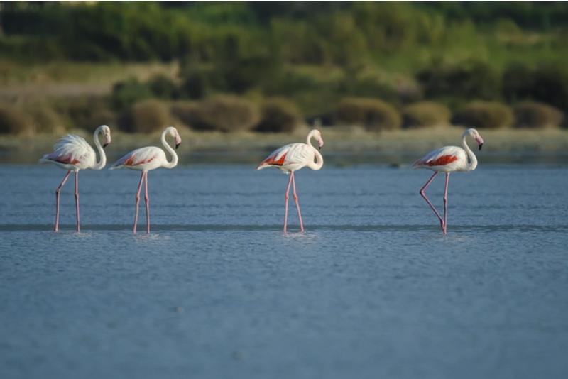 Alyki wetlands