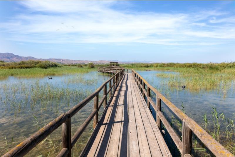 El Hondo Nature Reserve