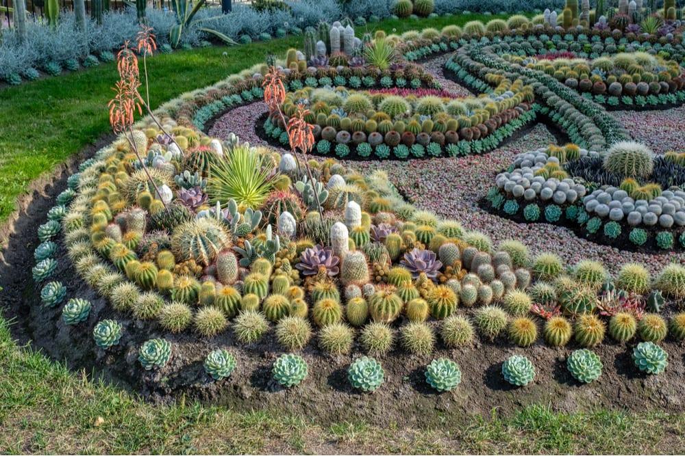 Kaktusplantering i norrköping